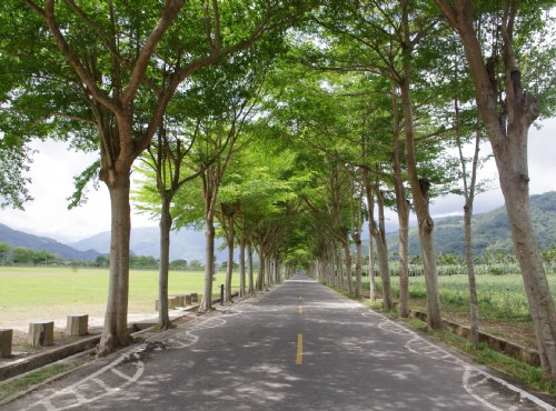 鹿野龍田自行車道