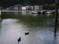 幽靜的潭景<br/> 攝影:老山羊部落格