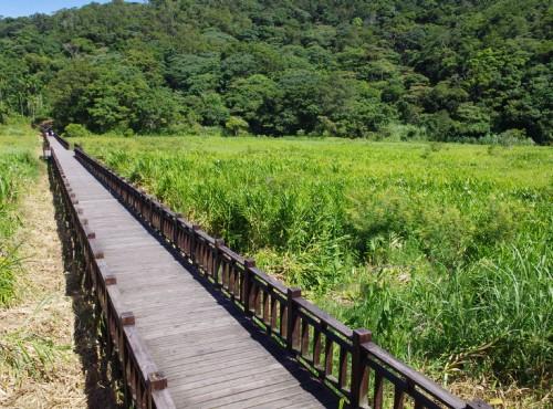 東源濕地(東源水上草原)-東源濕地