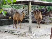 雙峰駱駝<br/> 攝影:Eva隨手拍