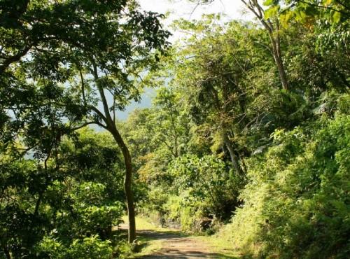 知本国家森林游乐区-榕蔭步道南端景觀