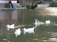 大湖公園<br/> 攝影:林仲哲