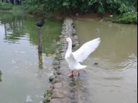 八德埤塘生態公園<br/> 攝影:Eva隨手拍
