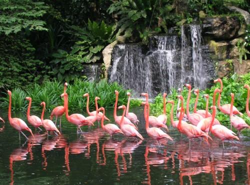 裕廊飛禽公園-裕廊飛禽公園