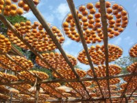 味卫佳柿饼观光农场