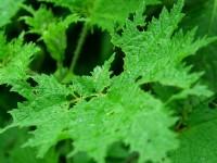 青翠植物<br/> 攝影:簡時強