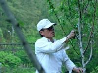修剪杏花樹<br/> 攝影:小管