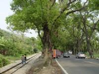 鐵軌與樹木的交織<br/> 攝影:小管
