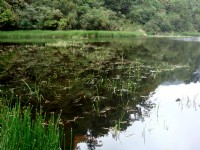 寧靜湖面<br/> 攝影:余燕鳳