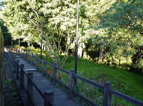 Alishan Forest Recreation Area-201407祝山線沿途步道