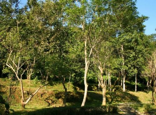 知本国家森林游乐区-植物園區景觀