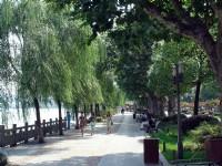 垂柳湖景相映<br/> 攝影:余錫堅