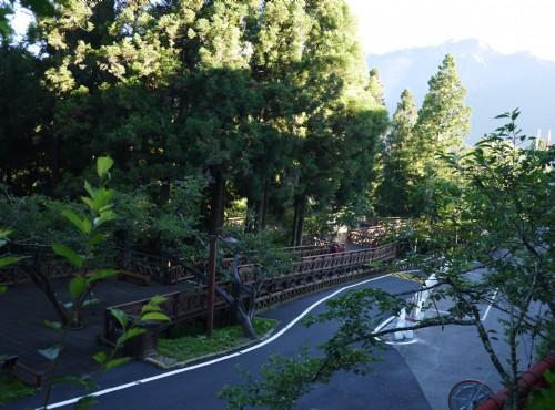 Alishan Forest Recreation Area-201407阿里山林間步道