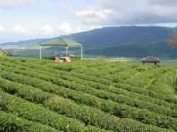 玉蘭茶園一景<br/> 攝影:小管