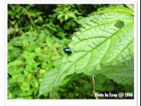 昆蟲2<br/> 攝影:跟著小野郎出走