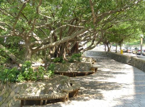 北投溫泉-大樹休憩區