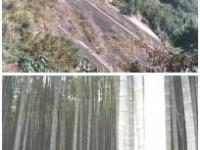 巃頭森林遊樂區