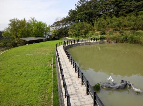 樟湖步道-樟树步道