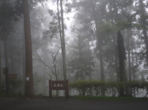 溪頭自然教育園區(溪頭森林遊樂區)-迷霧中的大學池