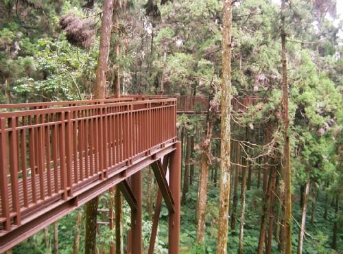 溪頭自然教育園區(溪頭森林遊樂區)-空中走廊