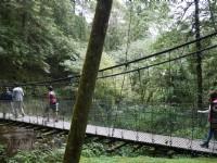 201407阿里山吊橋<br/> 攝影:三個井