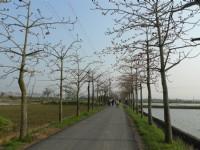 白河自行車道