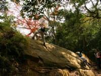 山中楓林景觀<br/> 攝影:老山羊部落格