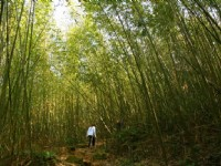 北線步道竹林景觀<br/> 攝影:老山羊部落格
