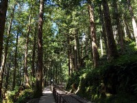 人工檜木林<br/> 攝影:amo
