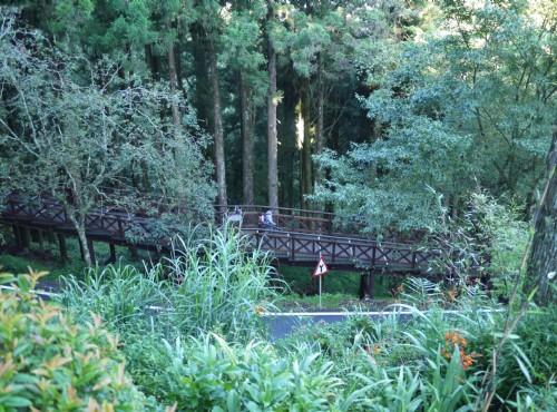 Alishan Forest Recreation Area-201407林間步道