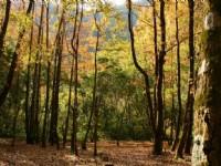 楓香林休憩區景觀<br/> 攝影:老山羊部落格