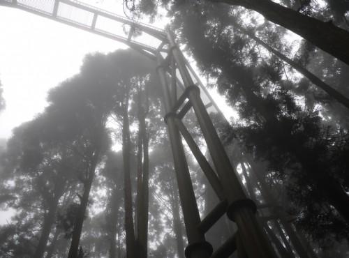 溪頭自然教育園區(溪頭森林遊樂區)-溪頭空中走廊