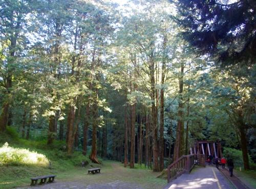 水山巨木步道
