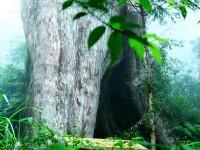 樹洞<br/> 攝影:簡時強