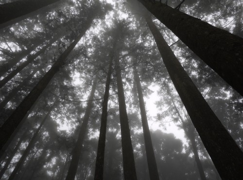 溪頭自然教育園區(溪頭森林遊樂區)-溪頭觀景步道
