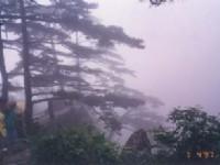 黃山上的松樹<br/> 攝影:台灣中國旅行社