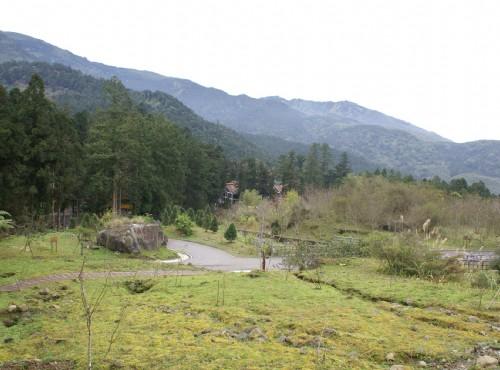 溪頭自然教育園區(溪頭森林遊樂區)-針葉樹標本園區