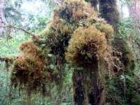 樹木長滿樹苔<br/> 攝影:余燕鳳