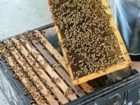 蜜蜂<br/> 攝影:簡時強
