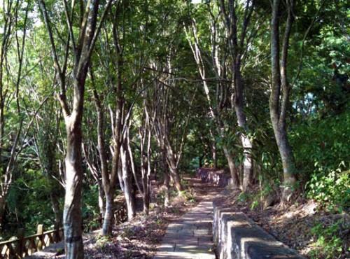紅葉公園楓林道