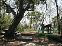 樹蔭步道<br/> 攝影:老山羊部落格