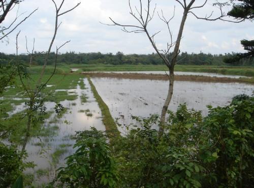 無尾港水鳥保護區