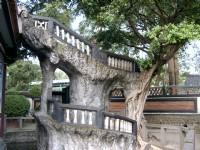 樹根攀沿著建物<br/> 攝影:曾婉玲