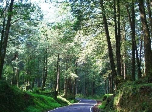 阿里山神木-整齊林道
