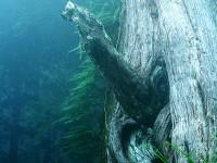 男人樹<br/> 攝影:簡時強