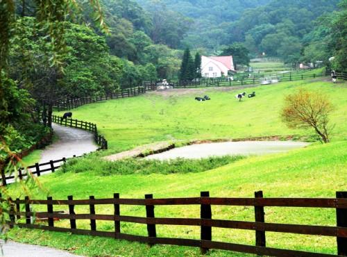飛牛牧場-乳牛生態區全景