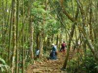 北線步道竹林與闊葉林<br/> 攝影:老山羊部落格
