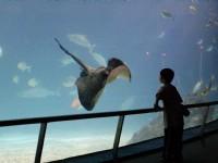 Photo:國立海洋生物博物館