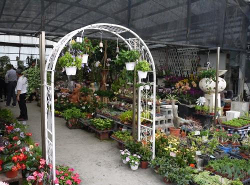 七甲花卉園區