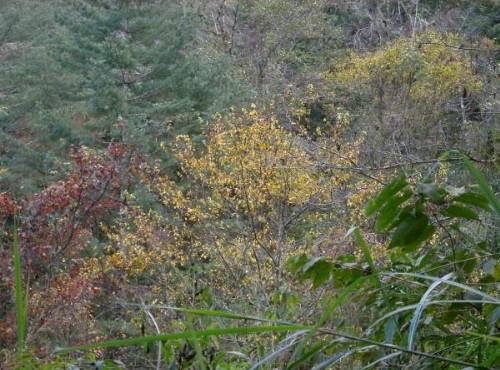 瓦拉米古道(瓦拉鼻)-顏色繽紛的山林